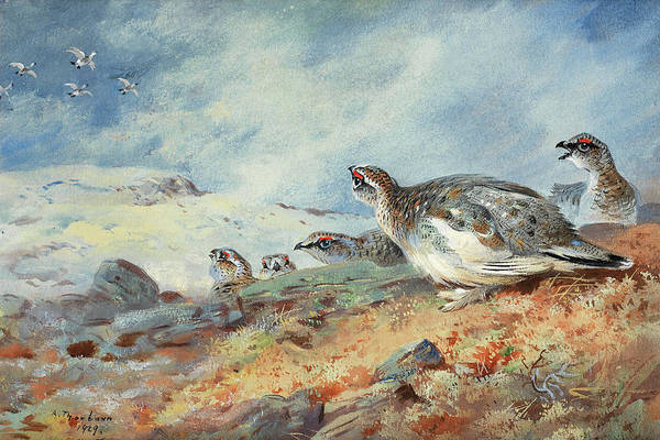 Wall Art - Painting - Ptarmigan In The Snow by Archibald Thorburn
