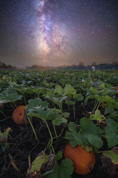 Wall Art - Photograph - Pumpkin Patch  by Aaron J Groen
