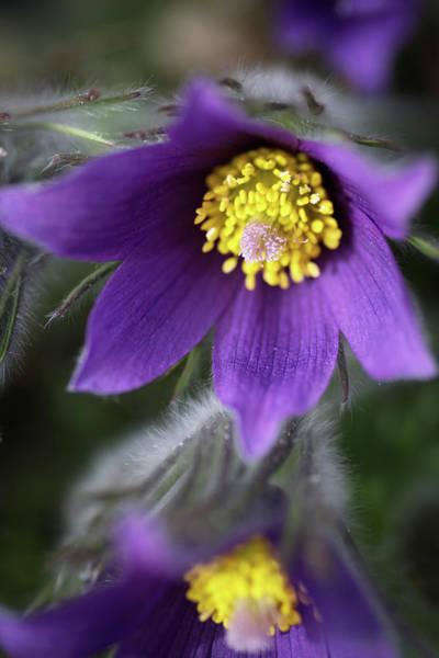 Wall Art - Photograph - Purple Flowers by Catherine Lau