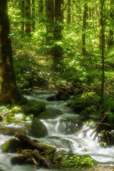 Southern Usa Photograph - Radiant Water, Smokies by Jerry Whaley