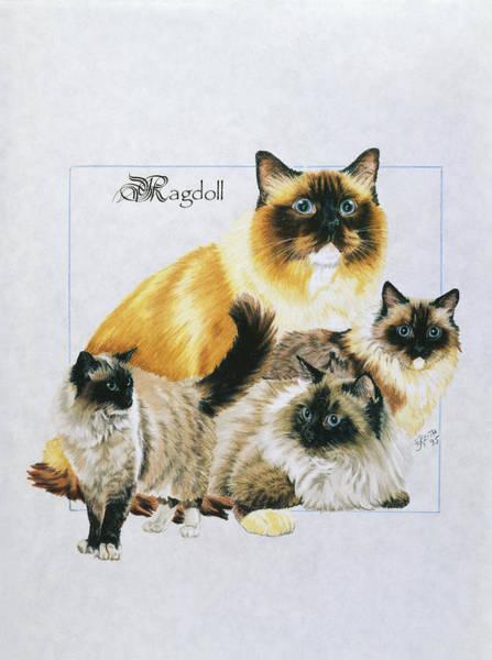 Drawing - Ragdoll by Barbara Keith