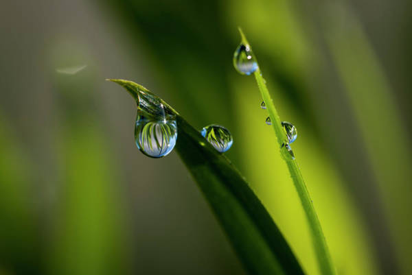 Photograph - Rain Drops On Grass by Robert Potts
