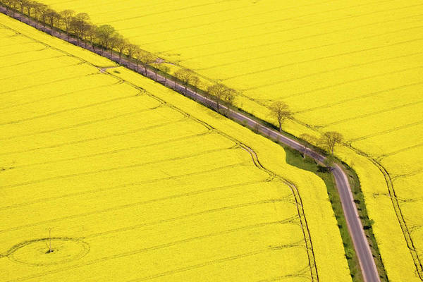 Photograph - Rape Field Photographed From The Air by Willi Rolfes