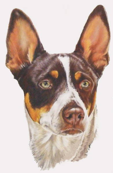 Mixed Media - Rat Terrier In Color by Barbara Keith