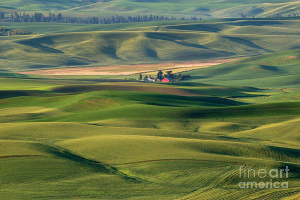 Wall Art - Photograph - Red On Green by Mike Dawson
