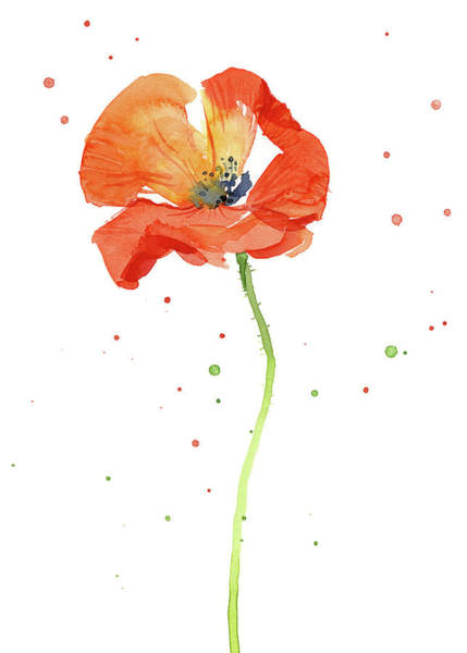 Wall Art - Painting - Red Poppy Flower by Olga Shvartsur