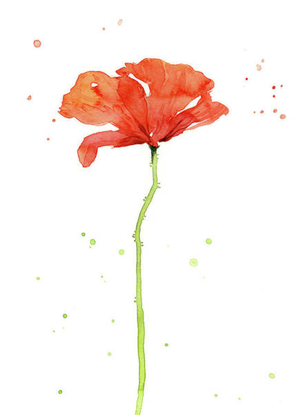 Wall Art - Painting - Red Poppy Watercolor by Olga Shvartsur