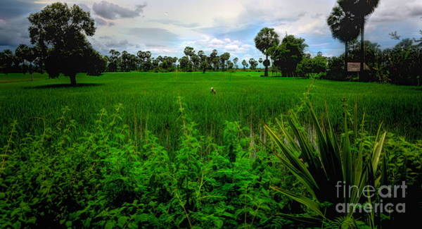Wall Art - Photograph - Rice Fields Cambodia  by Chuck Kuhn