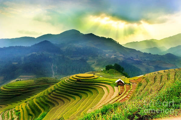 Wall Art - Photograph - Rice Fields On Terraced Of Mu Cang by John Bill