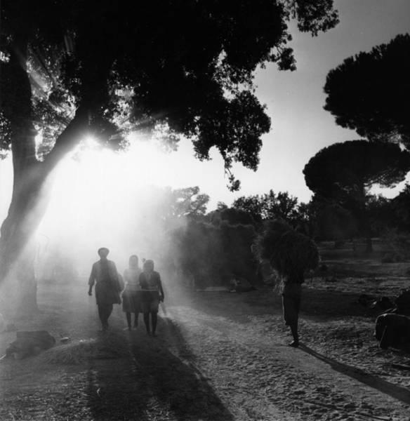 Farm Photograph - Rice Harvest by Bert Hardy