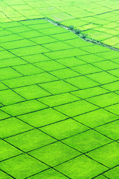 Wall Art - Photograph - Rice Paddy Fields, Thailand, Aerial View by Pete Atkinson