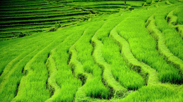 Wall Art - Photograph - Rice Terraces Near Pupuan by Dennis Walton