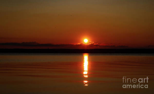 Wall Art - Photograph - Rise And Shine by William Norton