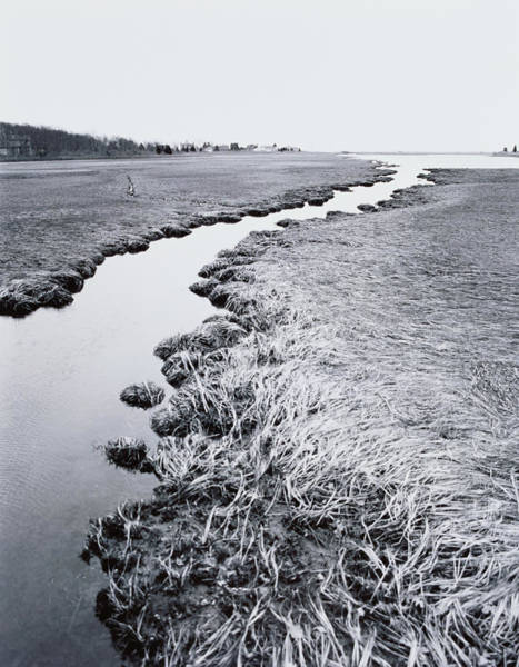Scenery Photograph - River Near Forest by Allan Montaine