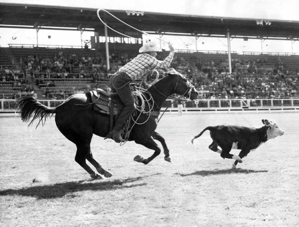 Contest Photograph - Rodeo Calf Roping Contest by Underwood Archives