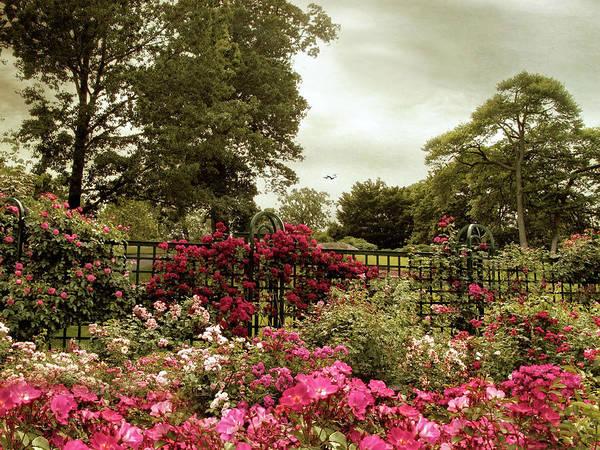 Photograph - Rose Garden Trellis by Jessica Jenney
