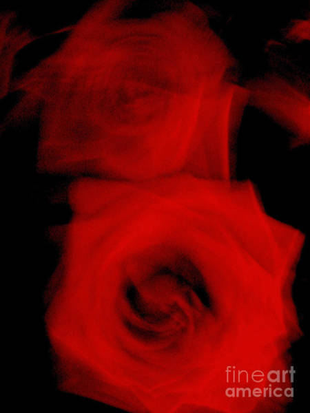 Wall Art - Photograph - Rose, Italy by Unknown