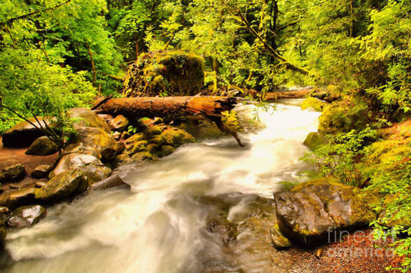 Wall Art - Photograph - Running  Through The Forest  by Jeff Swan