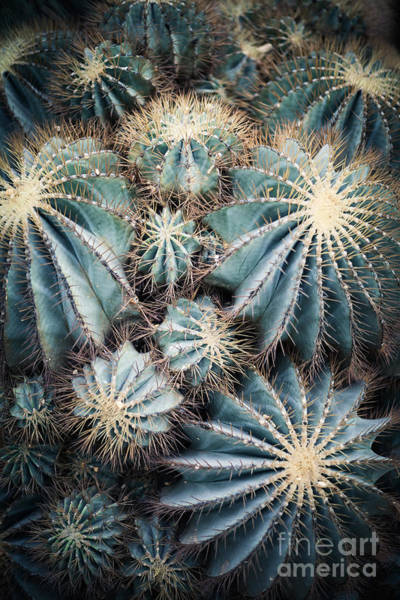 Wall Art - Photograph - Rustic Macro Shot Of Cactus - Tropical by Naturephotography