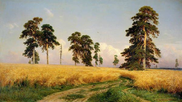 Wall Art - Painting - Rye by Ivan Shishkin