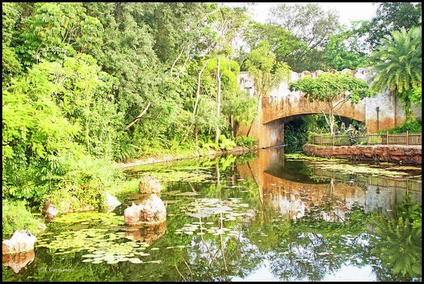 Photograph - Scenic View, Animal Kingdom, Walt Disney World by A Gurmankin