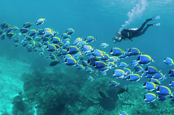 Underwater Camera Photograph - Scuba Diver With Camera by Georgette Douwma