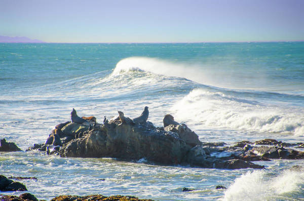 Photograph - Sea Lions At Shelter Cove - California by Bill Cannon