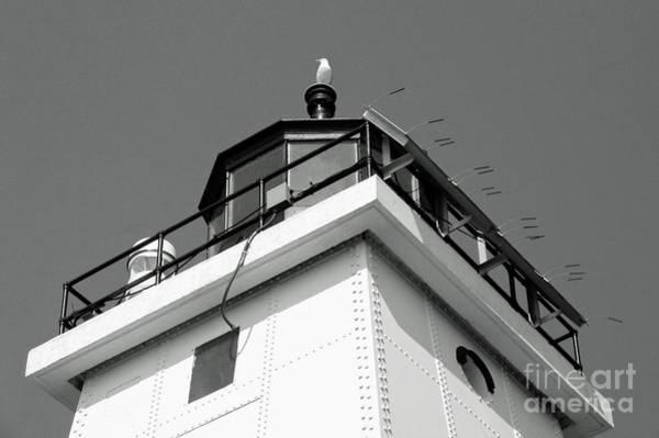 Photograph - Seagull Perch Bw by Ann Horn