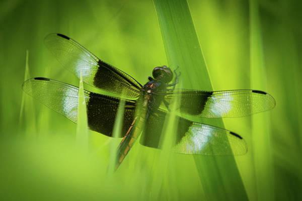 Photograph - Secret Dragon by Jeff Phillippi