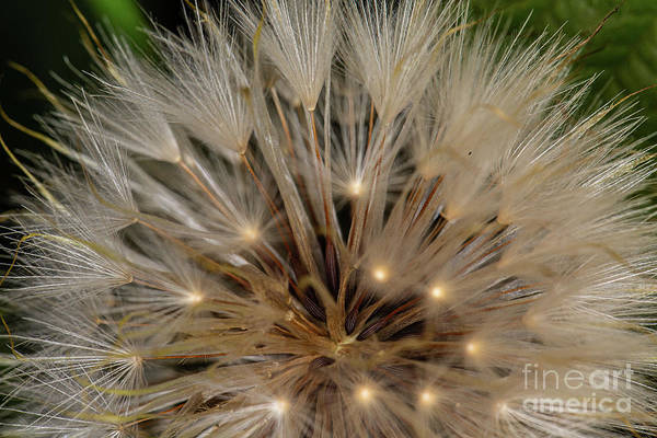 Photograph - Seedheads by Brian Roscorla