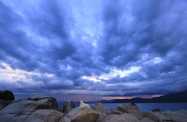 Photograph - Sekani Storm  by Sean Sarsfield