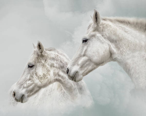 Wall Art - Photograph - She Dreamed Of White Horses by Ron McGinnis