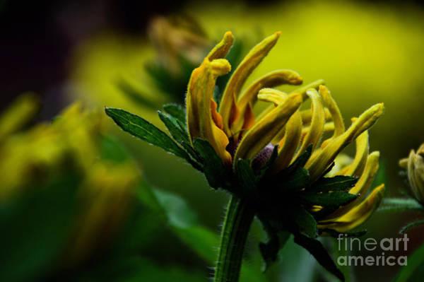 Photograph - Shining Brightly by Diana Mary Sharpton