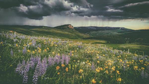 Wall Art - Photograph - Showers And Flowers - Big Horn National Forest by U S F S
