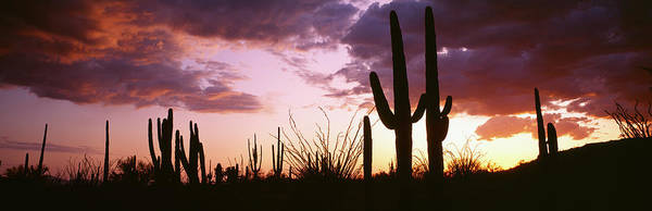 Wall Art - Photograph - Silhouette Of Saguaro Cactus At Sunset by Panoramic Images