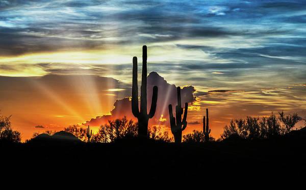 Wall Art - Photograph - Silhouetted Saguaro Sunset  by Saija Lehtonen