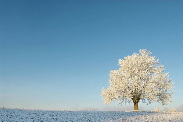 Elm Tree Photograph - Single Elm Tree Covered In Snow In Open by Erik Buraas