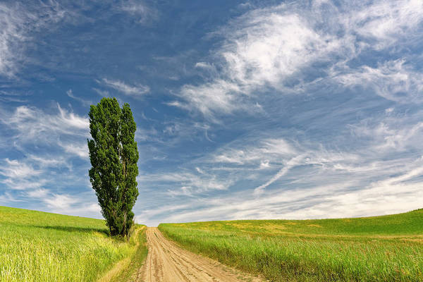 Wall Art - Photograph - Single Tree And Rural Dirt Road by Adam Jones