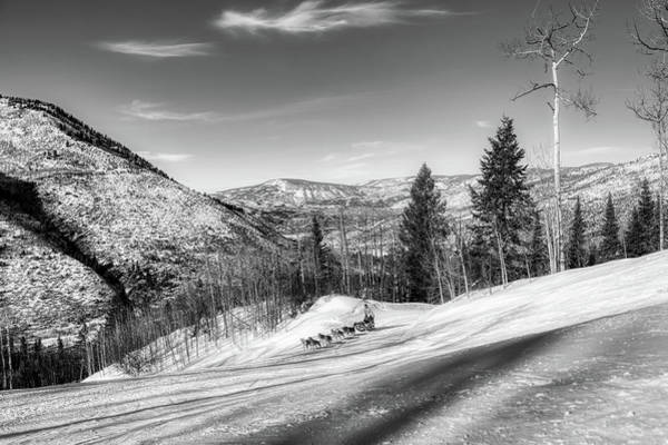 Wall Art - Photograph - Sled Dogs Racing Through The Rocky Mountains Winter Countryside by Mountain Dreams
