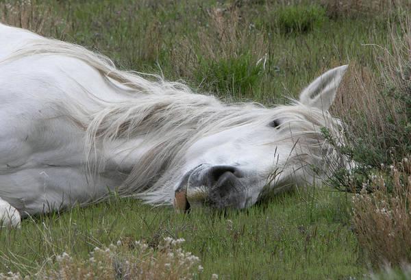 Photograph - Sleeping Beauty by Kent Keller