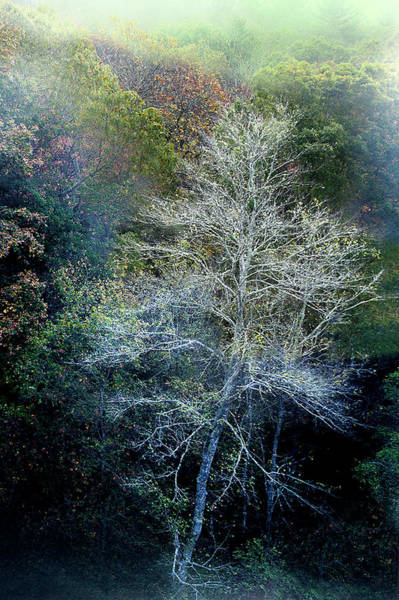 Photograph - Smoky Mountain Trees by David Chasey