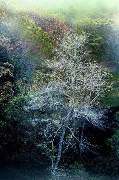 Photograph - Smoky Mountain Trees by David Chasey