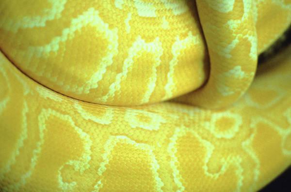 Photograph - Snake by John Foxx