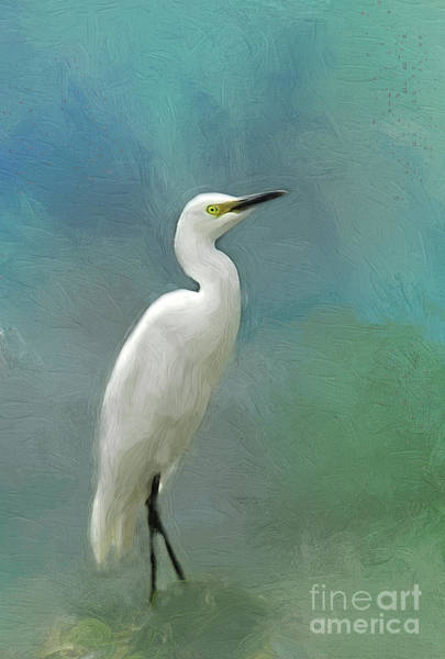 Wall Art - Photograph - Snowy Egret by Darren Fisher