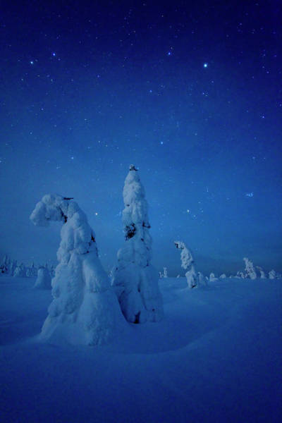 Finnish Photograph - Snowy Landscape In Riisitunturi by Margus Muts