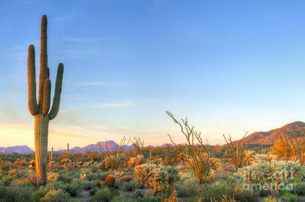 Wall Art - Photograph - Sonoran Desert Catching Days Last Rays by Anton Foltin