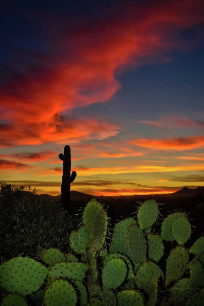 Photograph - Sonoran Sunset by Renee Sullivan