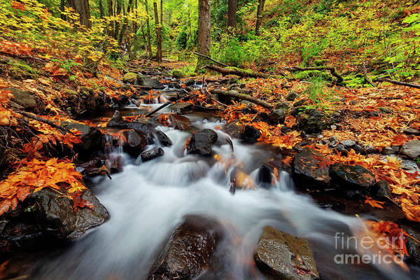 Wall Art - Photograph - Starvation Creek Autumn Rush by Mike Dawson