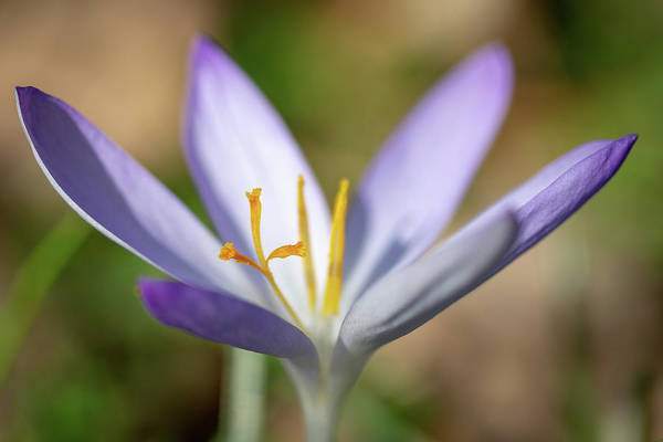Photograph - Spring by Andreas Levi