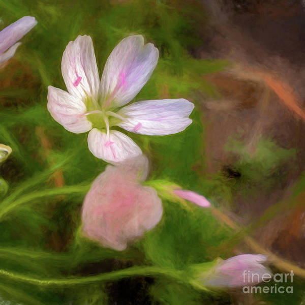 Crouching Digital Art - Spring Beauty by Roxie Crouch